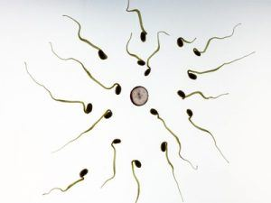 Get Your Sperm Count Up Naturally